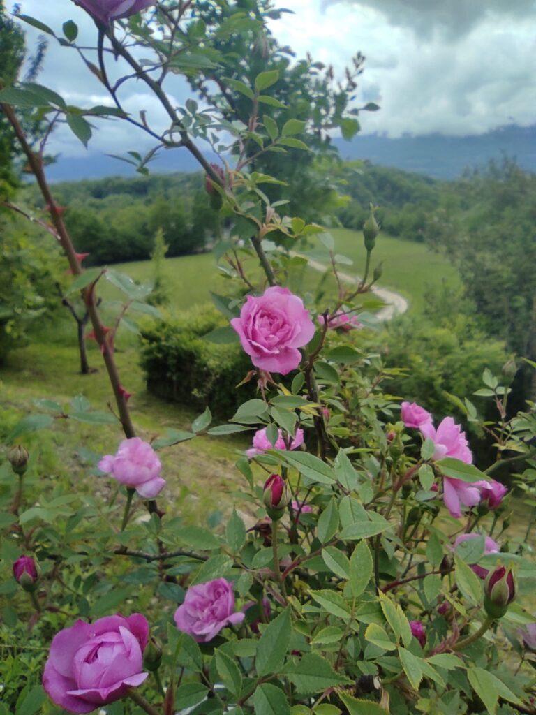 Valbelluna: 3 esperienze da vivere a contatto con la natura!