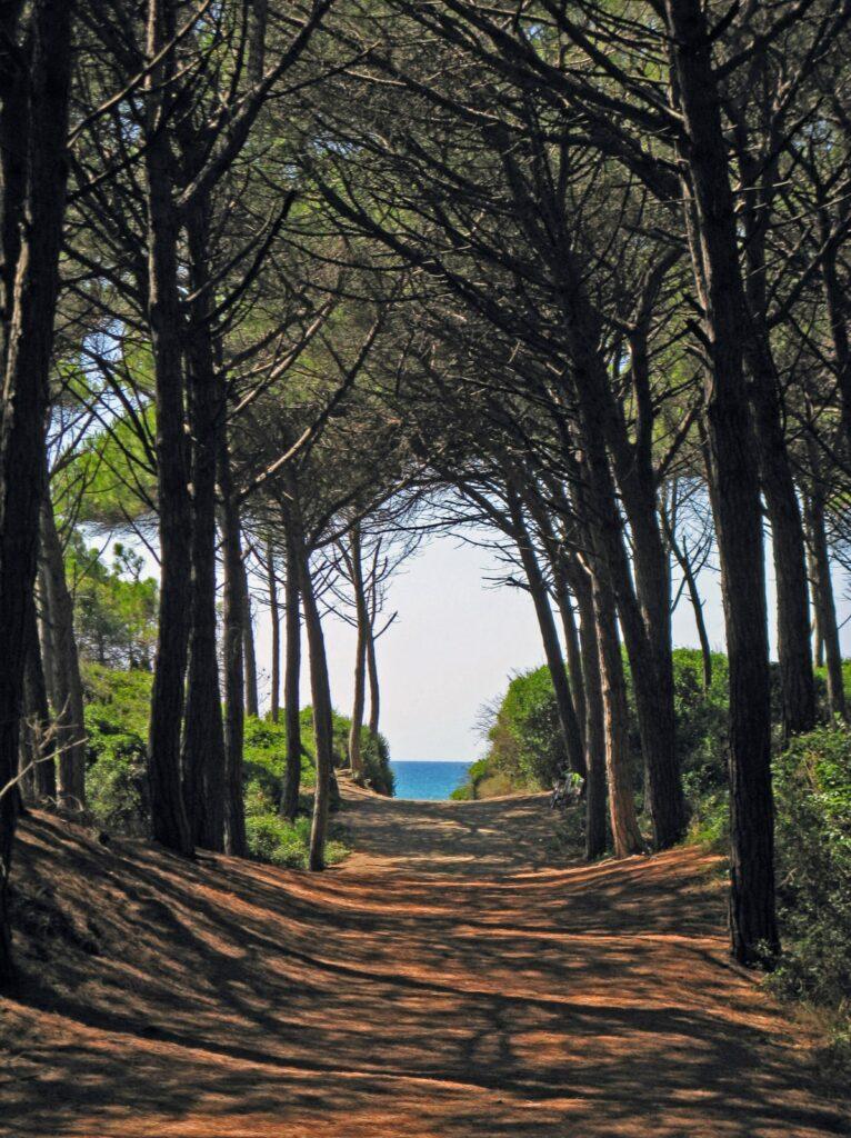 La bellezza selvaggia della Maremma Toscana